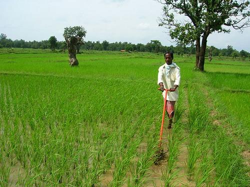 Agricultural economy in Raigarh