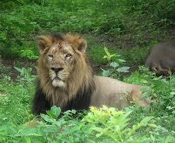 Major Attractions of Pradyuman Zoological Park in Rajkot