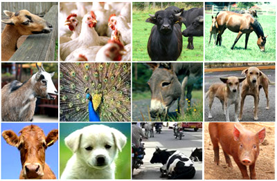 Welfare of animals in Rajkot