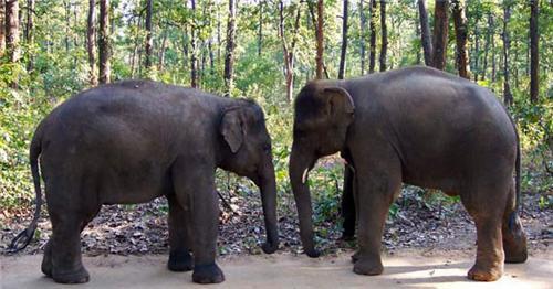 Glimpses of Elephant at Bhagwan Birsa Biological Park in Ranchi