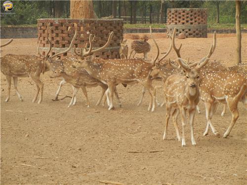 Conservation of Deer at Deer Park in Ranchi