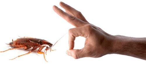 Pest_control_services_in_Ranchi