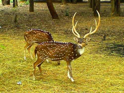 Tourism in Sangli