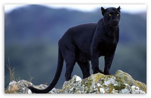 Fauna of Solan