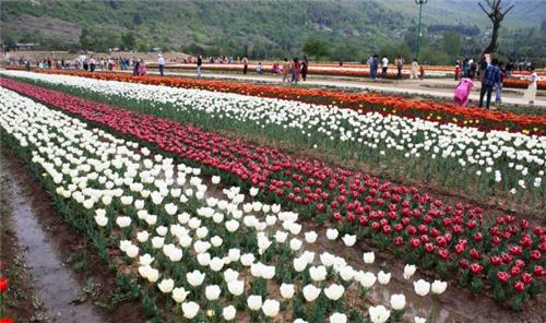Gardens in Srinagar