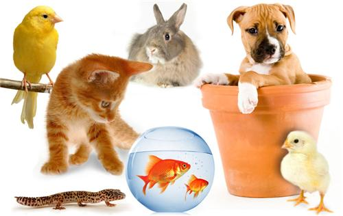 Pet Shops in Thanjavur