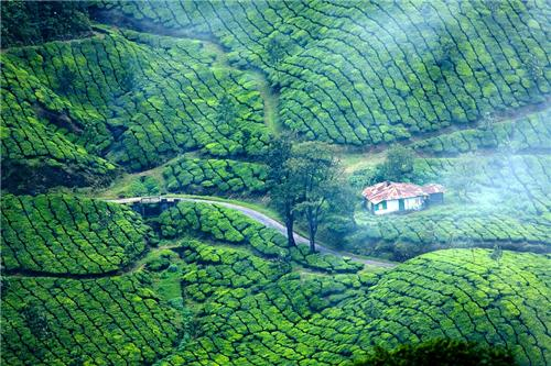 How to Reach Munnar near Thiruvananthapuram