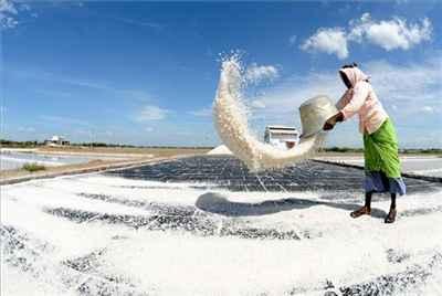 Salt Industry of Thoothukudi