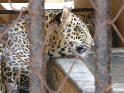 Thrissur Zoo Location