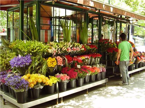 List of Florists in Vadodara