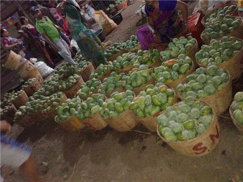 Trading in Mangoes in Valsad