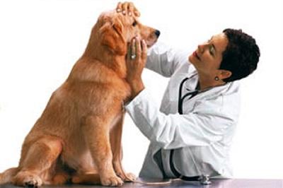 Vijayawada Pet Clinics