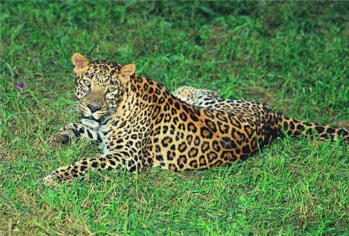 Attractions in Kalesar Wildlife Sanctuary