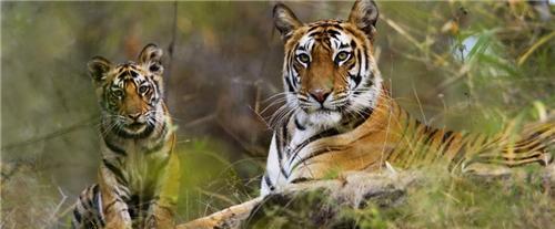 Gir National Park Ahmedabad