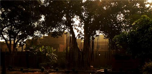 Banyan Tree in Amritsar