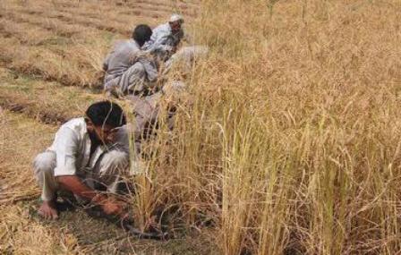 Agriculture in Anantnag