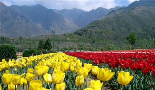 Pahalgam Flora and Fauna