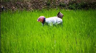 agriculture in ziro