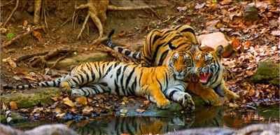 Mehao Wildlife Sanctuary
