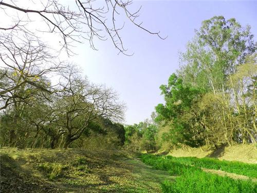 Dogachhi Forest