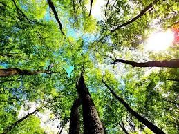 Saronbari Forest, Balurghat