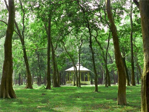 Dogachi Forest, Balurghat