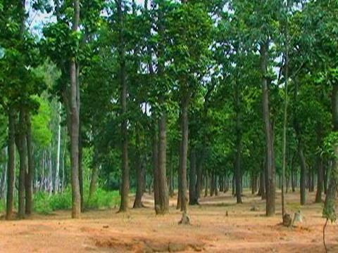 Forests in Bardhaman