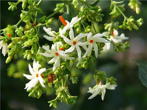 Flora in Bardhaman