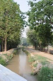 Lakhi Gungle in Bathinda