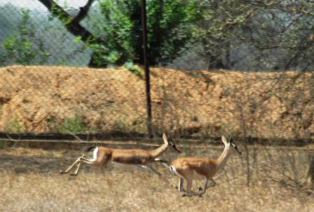 Wildlife at Bhiwani Zoo