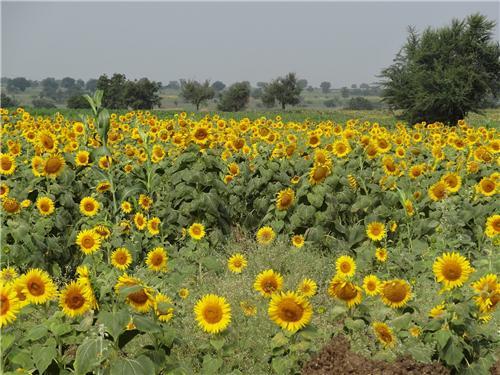 One Day Trip to Bijapur