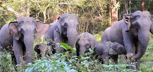 Kozhikamudhi Elephant Camp