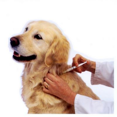 Pet doctor in coimbatore