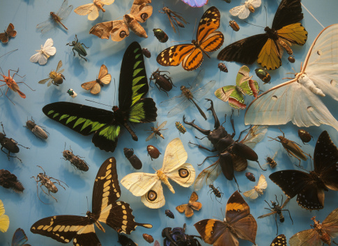 Butterfly collection at Bengal Natural History Museum