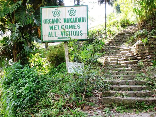 Makaibari Tea Estate - where heritage and functionlity go hand-in-hand