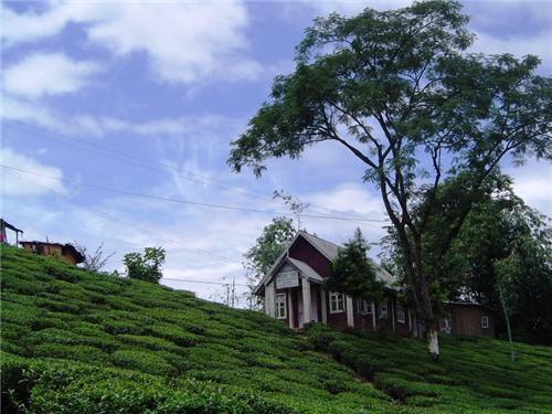 Tukvar Valley Tea Estate