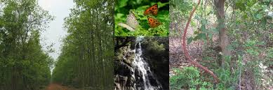 Garh Jungle