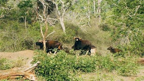 wildlife sanctuaries near Erode