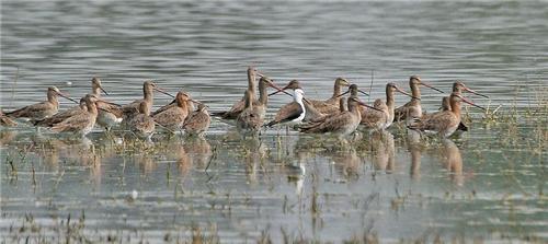 Sultanpur Bird Sancturay