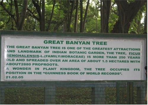 The Great Banyan Tree in Howrah