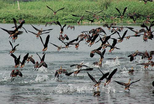 Bird Watching in Howrah