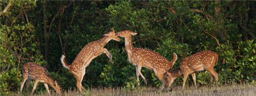 Endangered Species in Sunderban