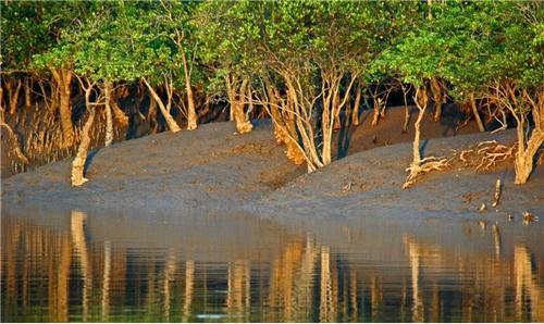 Sunderbans forest near Howrah