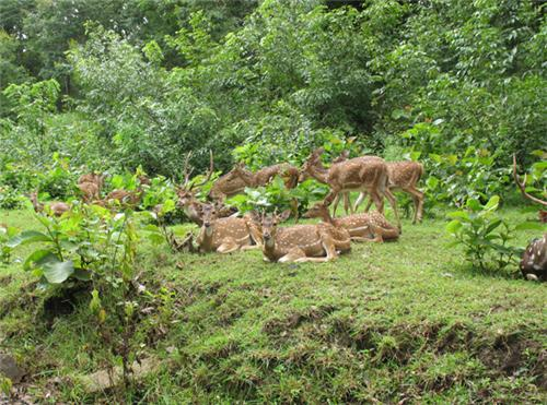 Wildlife Sanctuaries in Hubli