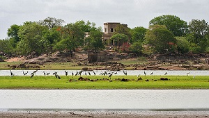 Pocharam Sanctuary