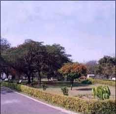 Picnic in Indira park