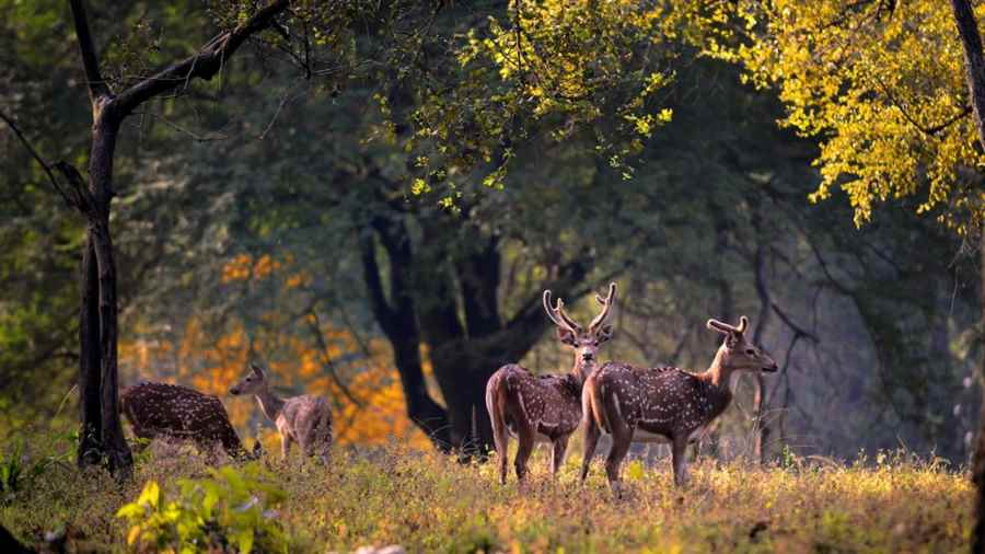 कान्हा राष्ट्रीय उद्यान, मध्य प्रदेश