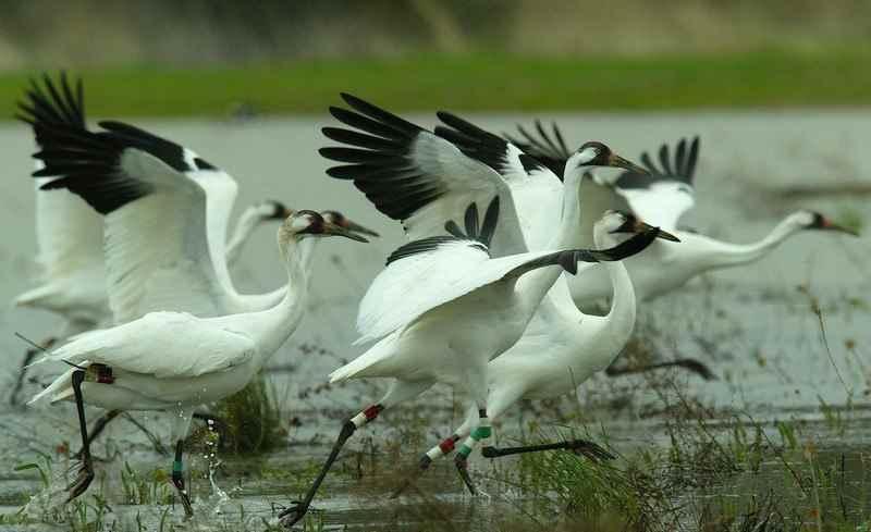 भारत में पक्षी-विहार के स्थान