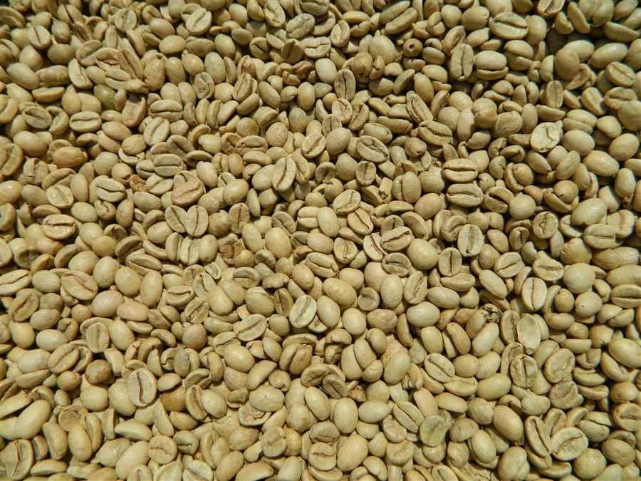 भारत में कॉफी बागान