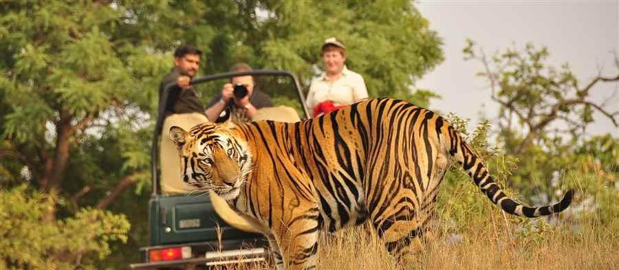 भारत में जंगल / वन्यजीव सफारी